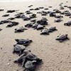 About seventy-eight turtles managed to delay flights out of JFK temporarily.