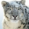 Mac OS X Snow Leopard will be available for purchase on August 28th.