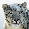Six things you need to know about Mac OS X Snow Leopard.